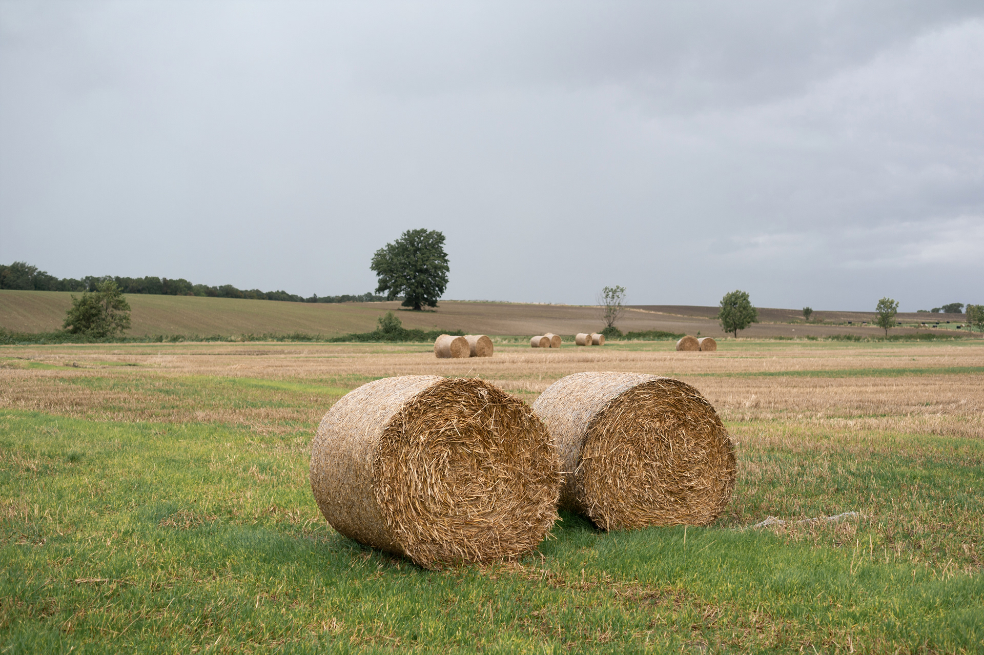 Bale of dry hay on field and medow, Bergov, Vlčice, Czech Republic
