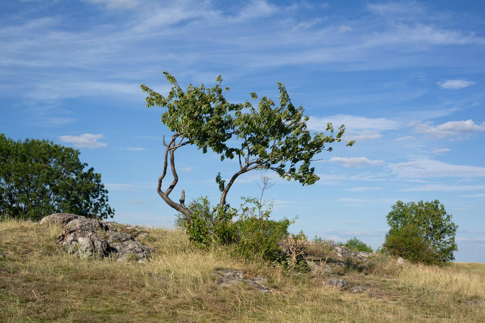 Landscape photography of tree in the summer, Divoká Šárka, Prague, Czech Republic, 2020