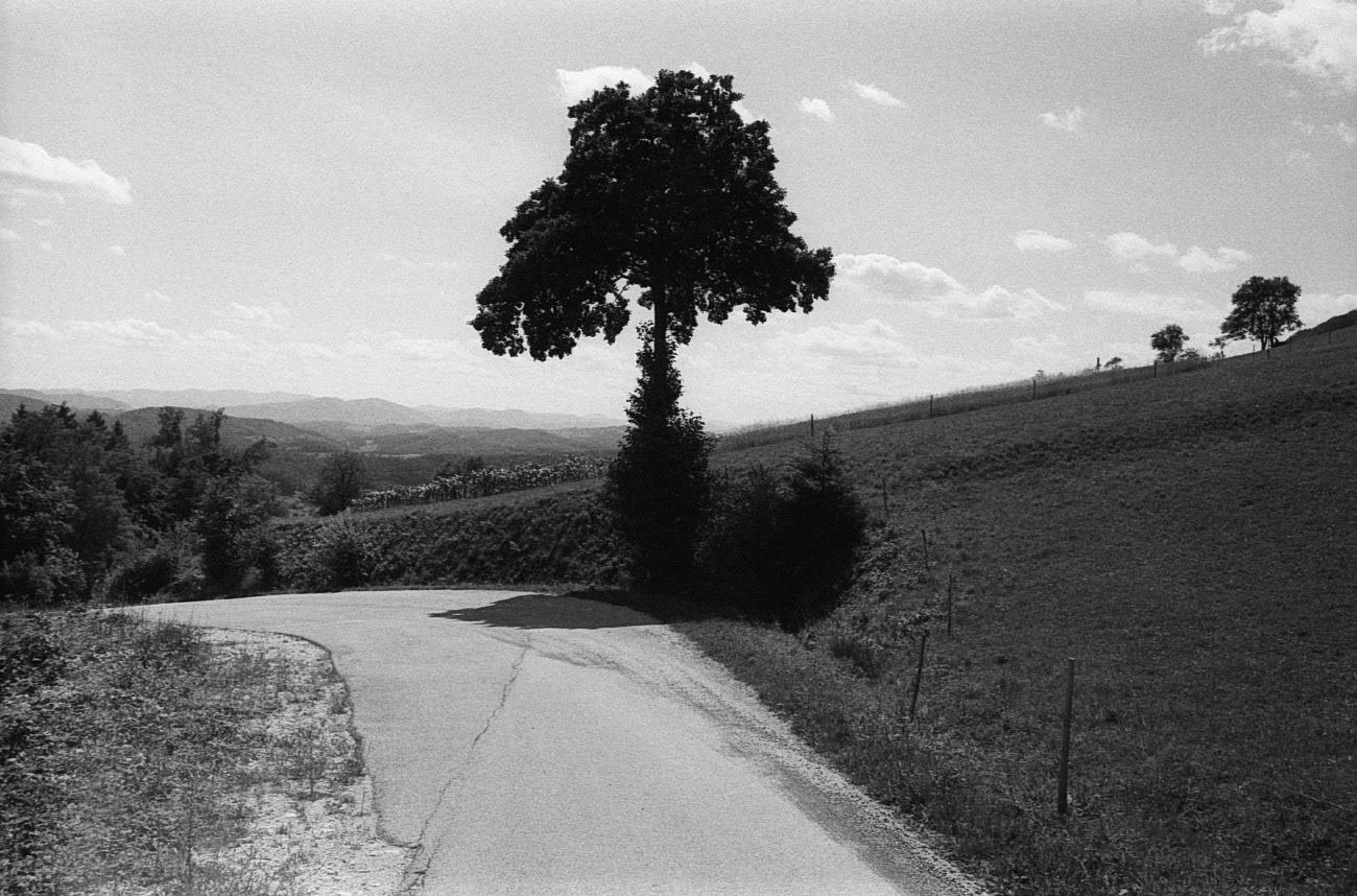 Landscape photograph of tree in the nature, near Donačka Gora, Karavanks, Slovenia