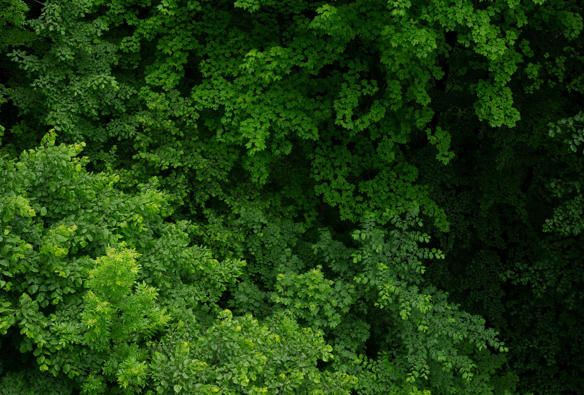 Trees and plants with green leaves, near Raška's stone, Kopřivnické hory, Czech Republic