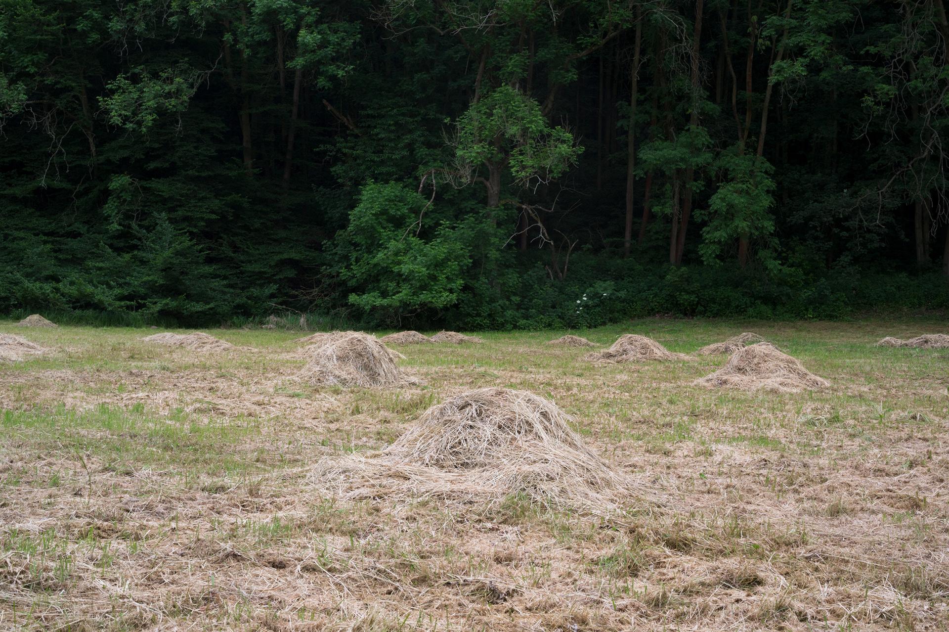 Mound of dry hay, Šárka valley, Czech Republic